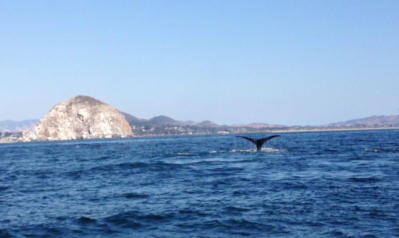 wild muse whales