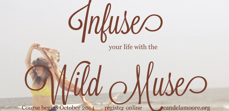 wildmuse_blog